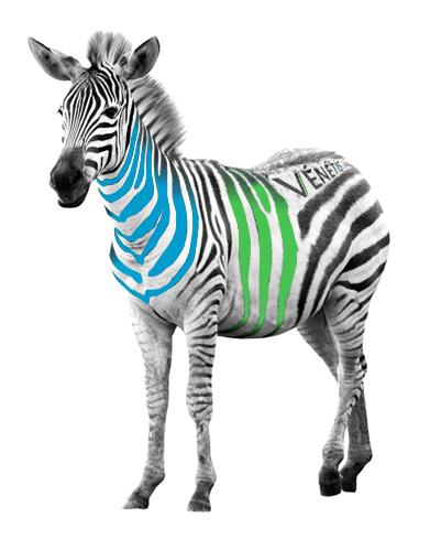 zebre-venetissmall